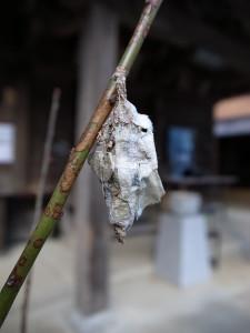 みのむし 蓑虫 ミノムシ
