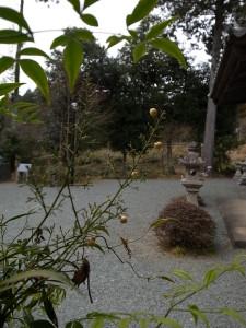 国束寺の白南天