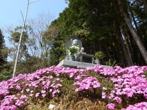 国束寺桃源郷の芝桜