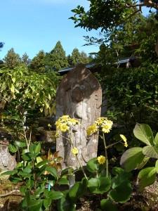 国束寺 ツワブキの花